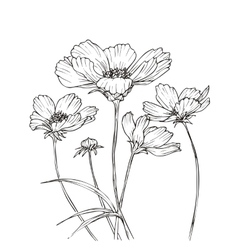 Hand drawn with cosmos flowers vector image vector image