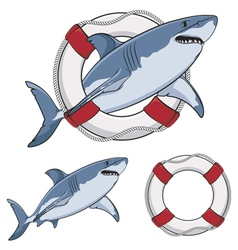 Color image white shark and a life buoy vector