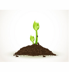 A young sprout in dirt isolated on white vector