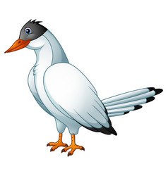 Cute bird tern cartoon vector