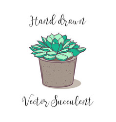 cute colorful hand drawn succulent in a concrete vector image