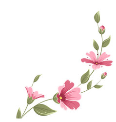 Baby breath gypsophila flower branch with blooming vector