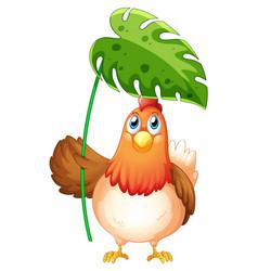 Chicken holding big leaf on white background vector