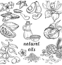 set cosmetic care ingredients organic vector image