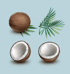 Set of coconuts vector