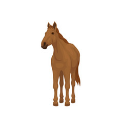 brown horse standing isolated on white background vector image