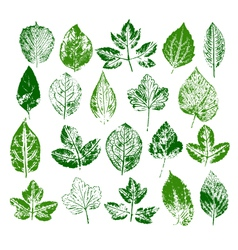 Paint stamps of different leaves set vector image vector image