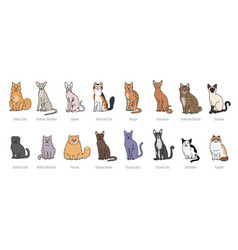 Popular cat breeds full face set line vector
