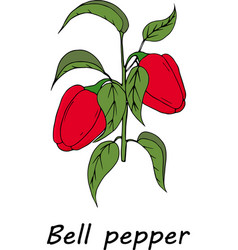 red pepper branch vector image