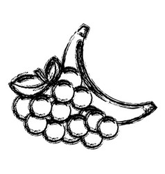 contour grape and babana fruit icon vector image vector image