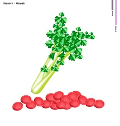 Fresh green celery with vitamin k and minerals vector