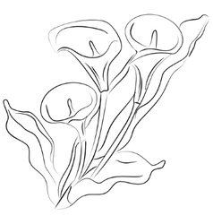 ink sketch Calla flower vector image