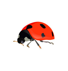 red ladybugs ladybird isolated on white vector image