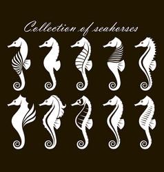 set seahorses vector image