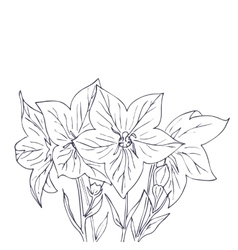 Hand drawn with bell flowers vector image vector image