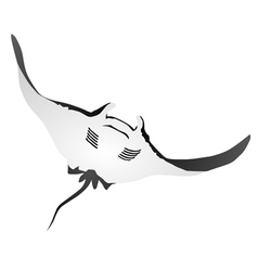 Atlantic manta vector image