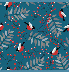 bullfinch birds berries mountain ash tree and vector image