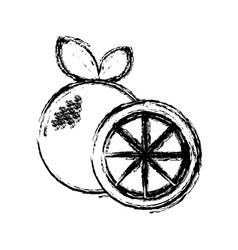 Contour orange fruit icon stock vector