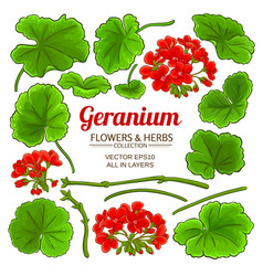 geranium elements set vector image