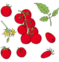 set of hand drawn tomatoes vector image