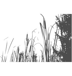 Silhouette of reed bush vector