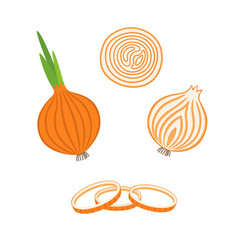 Whole bulb onion half and onion rings vector