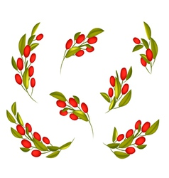 Set of Red Ripe Olives on A Branch vector image vector image