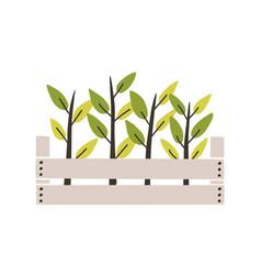 Green seedlings planted in wooden box young vector