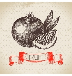 Hand drawn sketch fruit pomegranate Eco food vector