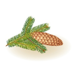 Pinecone on a white background vector