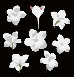 plumeria pudica flower set vector image