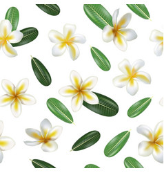realistic detailed 3d frangipani flowers seamless vector image