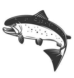 salmon isolated on white background fishing vector image