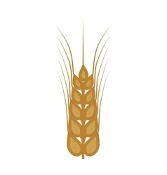 wheat ears food plant agriculture icon vector image vector image