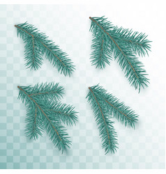 conifer branches set green branches of a vector image