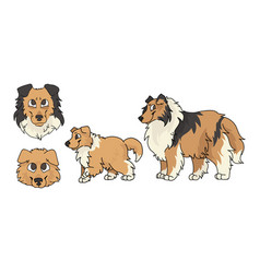 Cute cartoon rough collie dog and puppy set breed vector