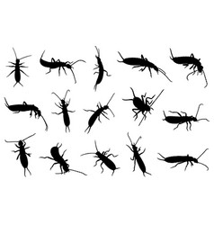 Set of different earwigs vector