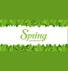 spring background with green foliage vector image