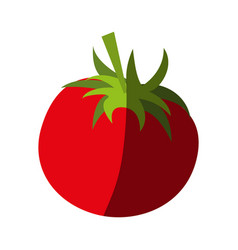 tomato food flat shadow vector image vector image