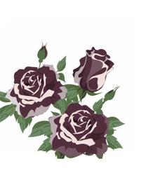 Vintage Watercolor roses vector image