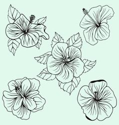 Set of Hawaii hibiscus flower leaf vector image