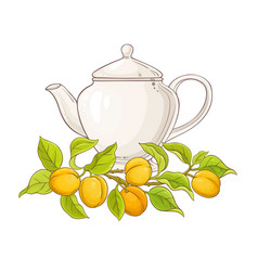 Apricot tea in teapot vector