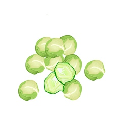 Fresh Brussels Sprout on A White Background vector