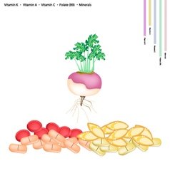 Fresh Turnip with Vitamin K A C and B9 vector
