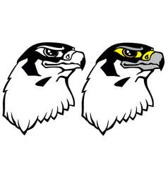 Head a falcon bird prey vector