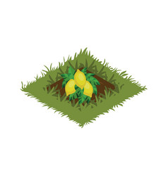 isometric cartoon fruit garden bed planted with vector image