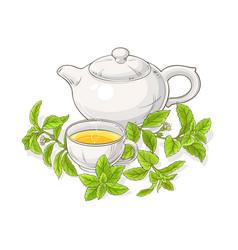 Stevia tea in teapot vector