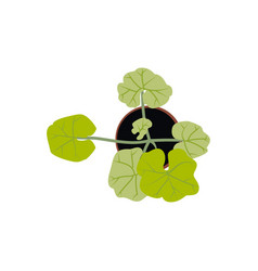 Top view green clover home plant outdoor vector