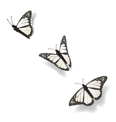Flying Butterflies vector image vector image