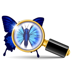 magnifier and butterfly vector image vector image